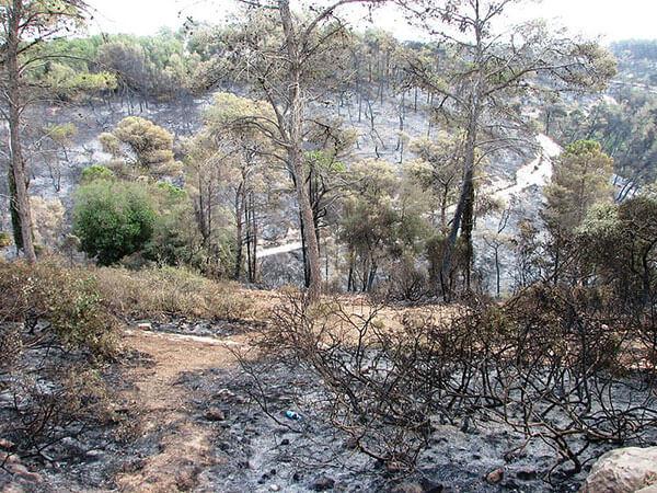 אסון הכרמל - השריפה בכרמל