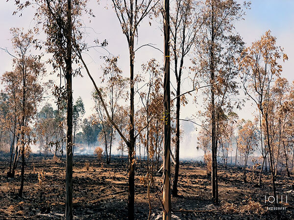שריפה ביער ליד קיבוץ נחל עוז בעקבות טרור הבלונים
